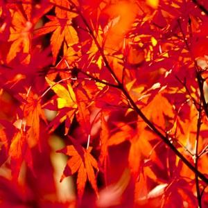 色とりどりの紅葉を美しく撮る裏ワザ!
