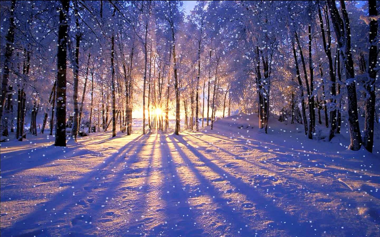 秋本番から冬場までの体づくりと癒しの方法!