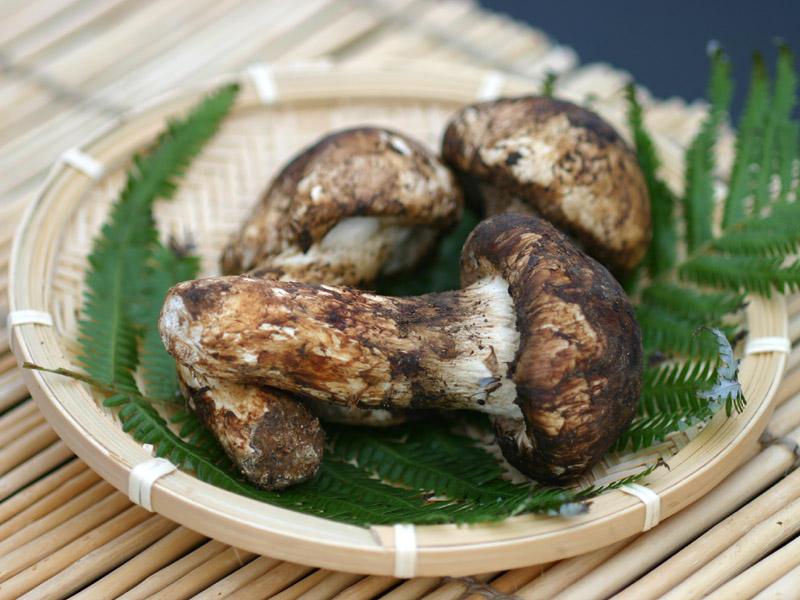おいしい松茸の選び方、食べ方!